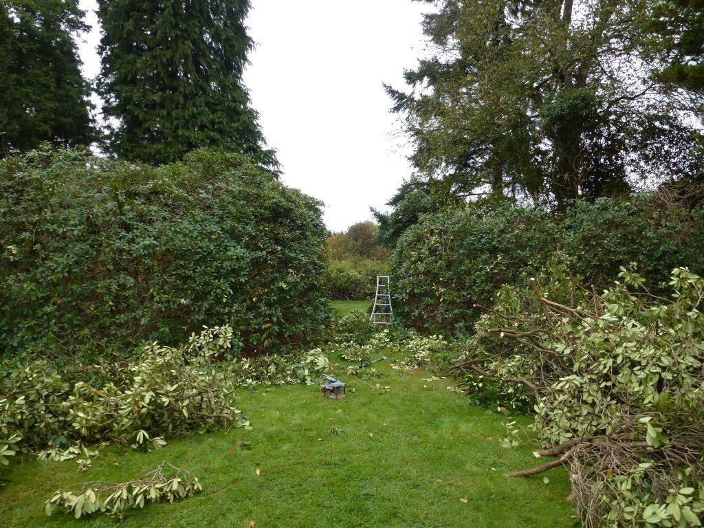 Rückschnitt der Rhododendren